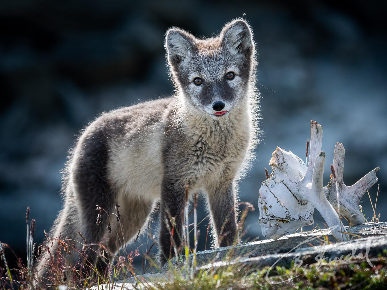 Fox schemes