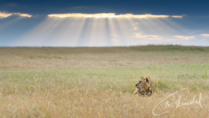 Heavenly lion