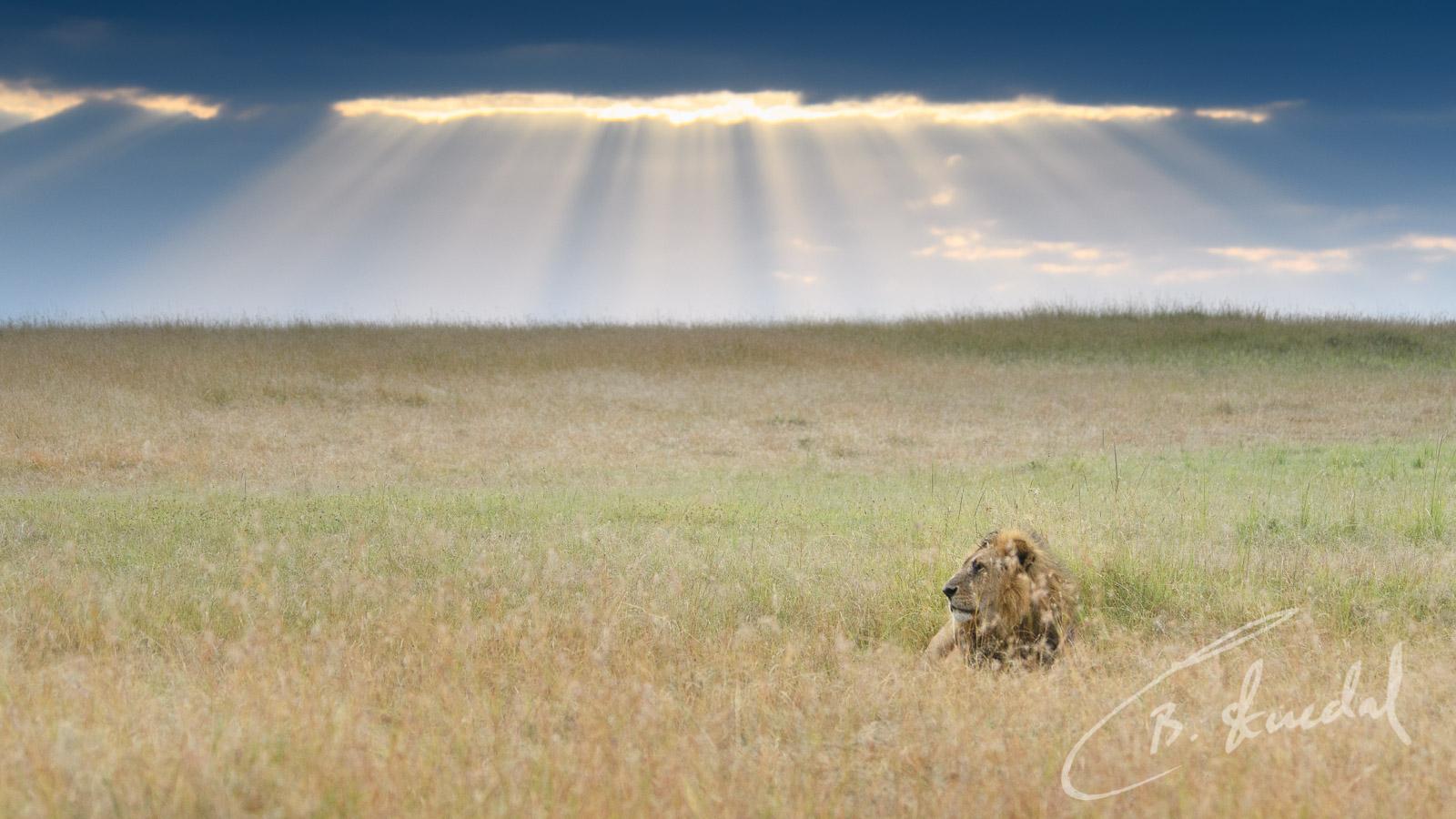 Heavenly lion