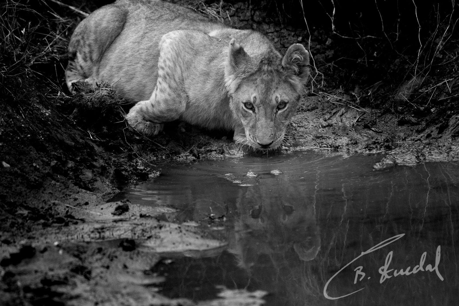 Drinking cub