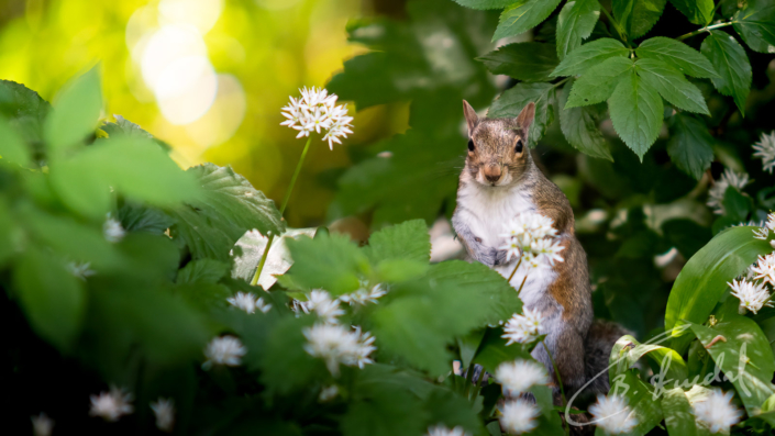 Squirrel among flowers