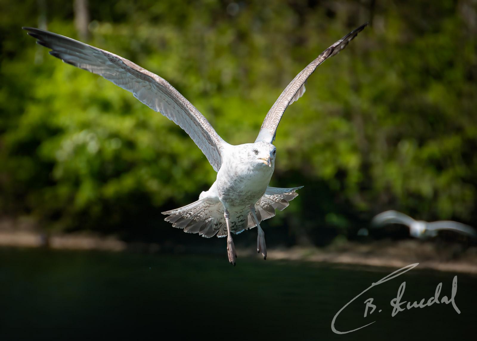 Seagull approach
