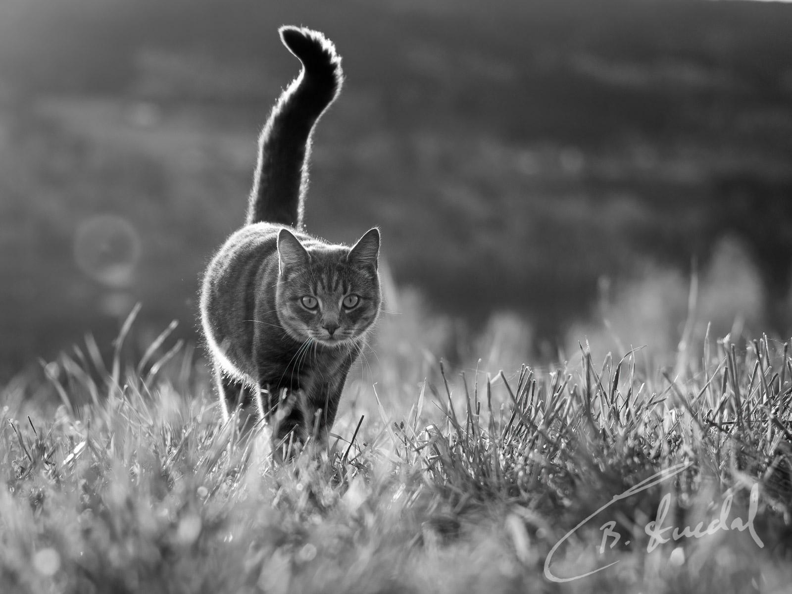 Field stroll