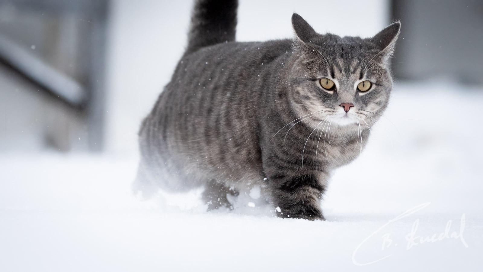 Snowy stride